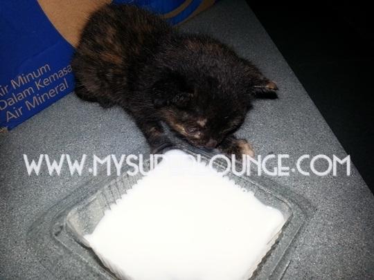 bawa anak kucing - minum susu